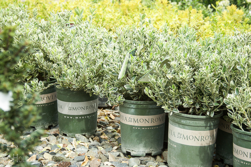 Landscaping for the Seasonal Decorator by She Holds Dearly