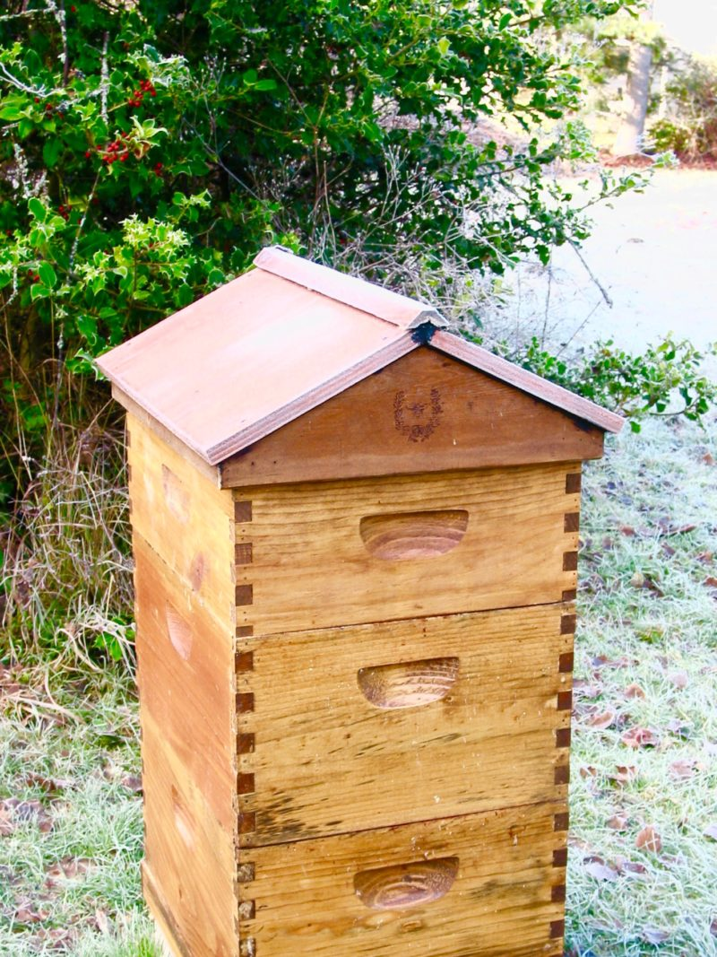 Beautiful Beekeeping For Beginners By Sheholdsdearly.comIf You Have Ever Thought  About Keeping Bees In Your