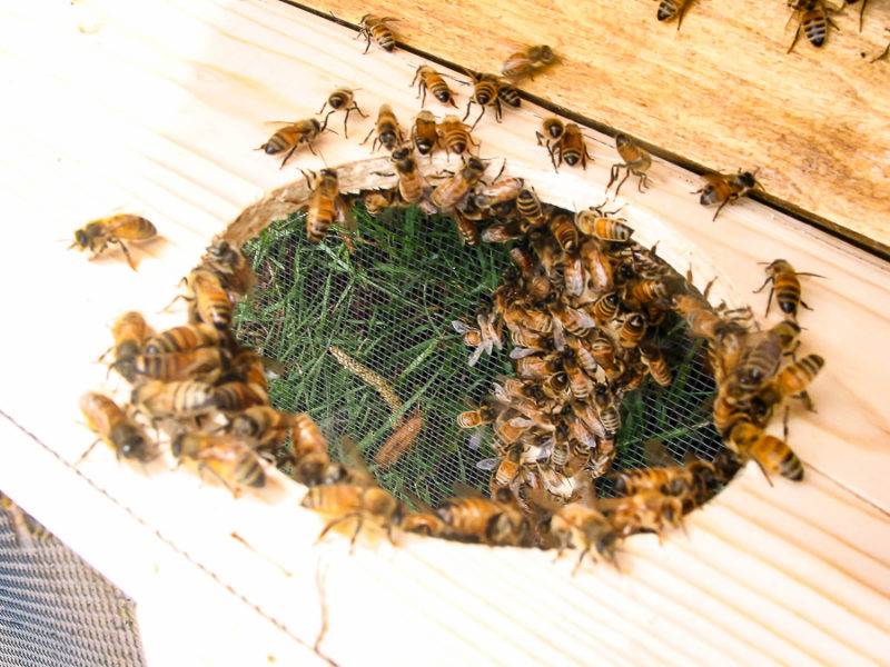 Hobby Beekeeping by sheholdsdearly.com