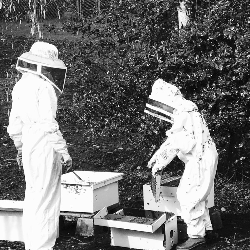 How to Become a Beekeeper by sheholdsdearly.com