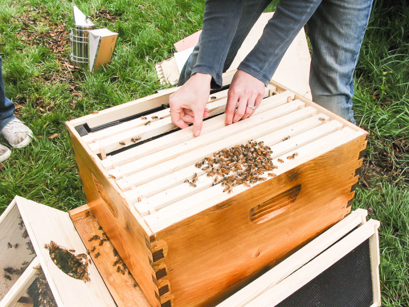 Keeping Bees Hobby by sheholdsdearly.com