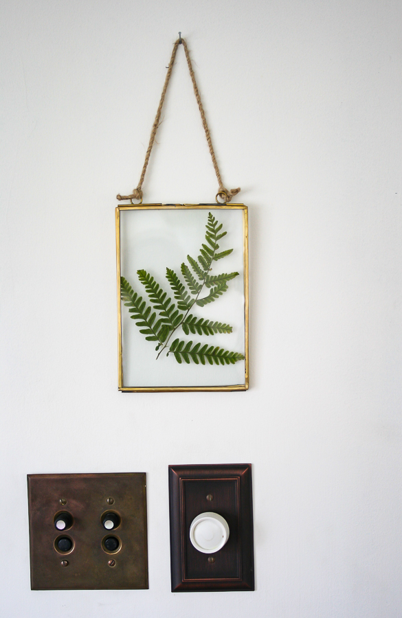 Pressed Fern in Frame by sheholdsdearly.com
