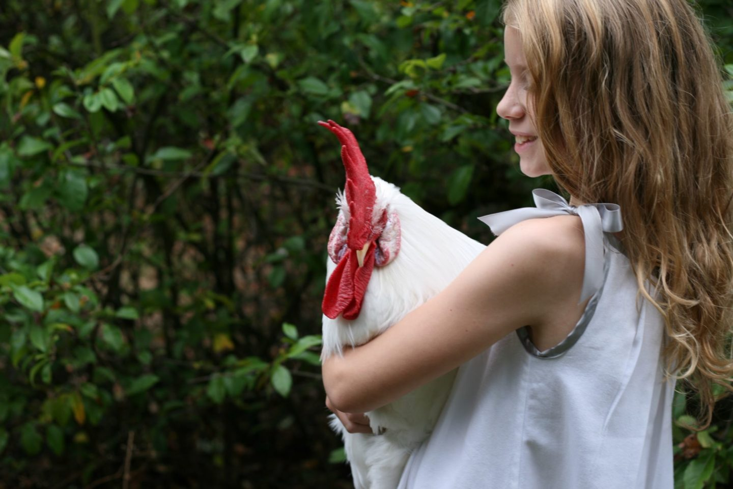 Leghorn rooster with farmgirl in pillowcase dress