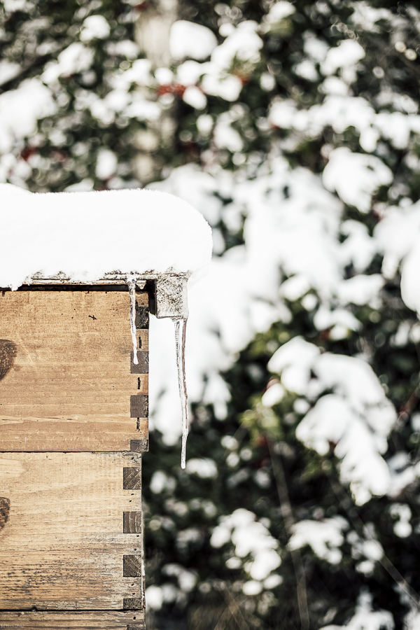 Beekeeping During Winter by sheholdsdearly.com