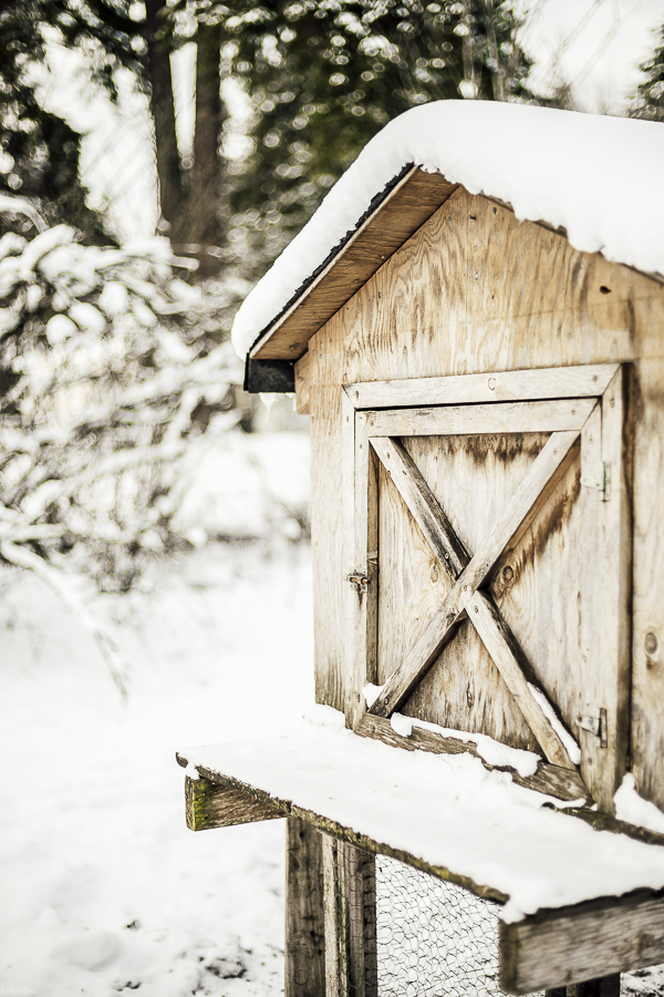 Chicken Coop During Winter by sheholdsdearly.com