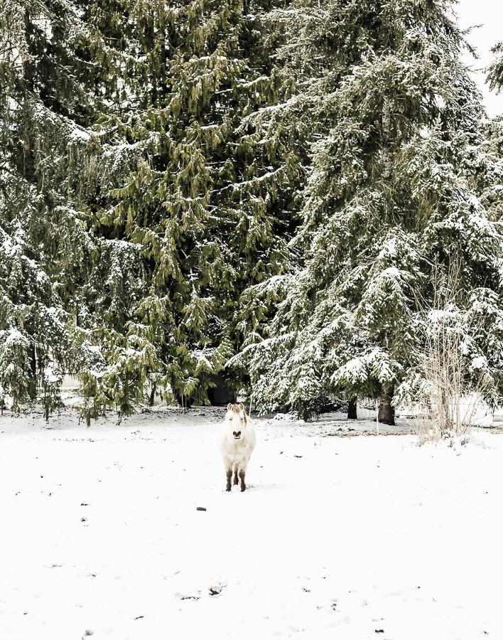 Snowdays on the Farm by sheholdsdearly.com
