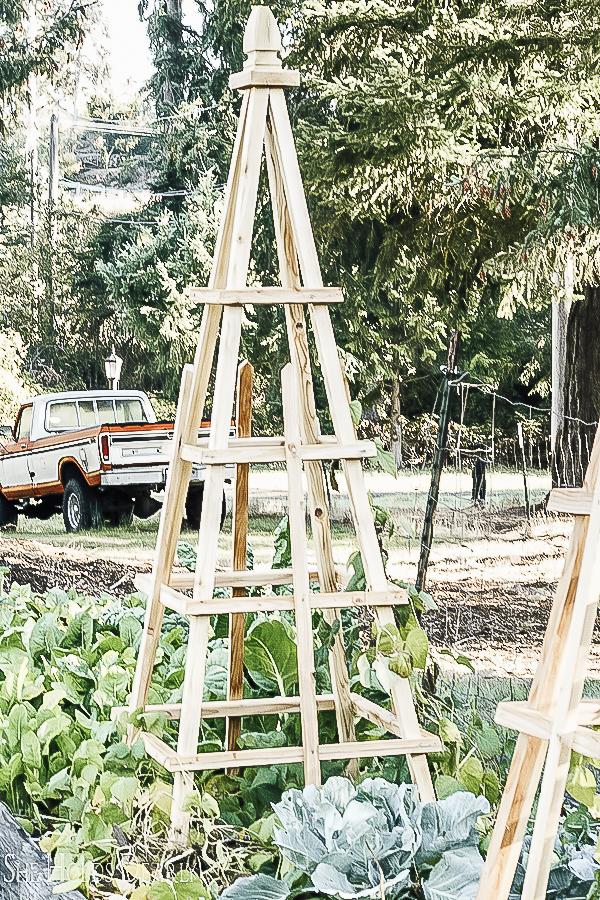 DIY Garden Trellis Pyramids by sheholdsdearly.com