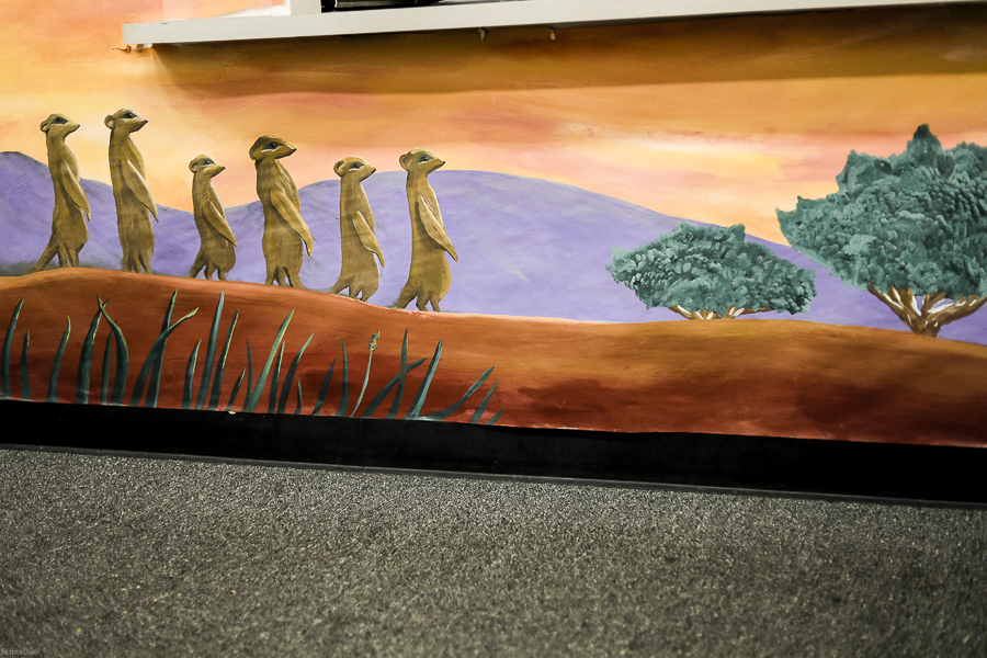 Meerkat Mural In the Wild by sheholdsdearly.com