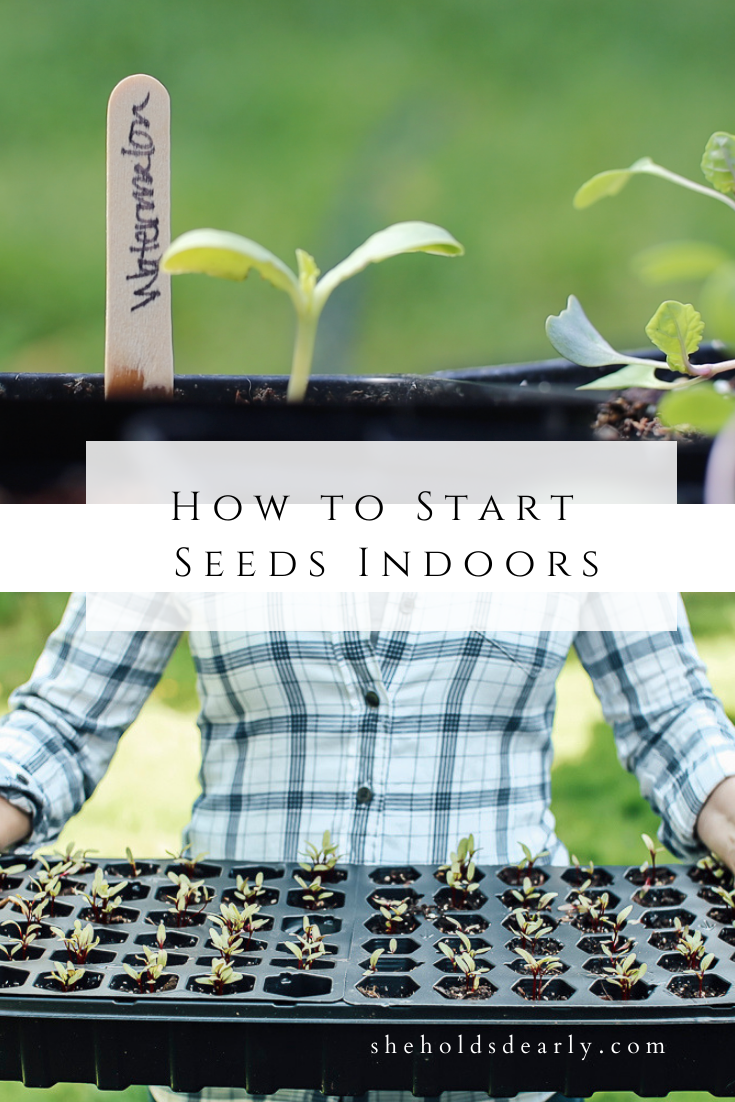 Starting Seeds Indoors by sheholdsdearly.com