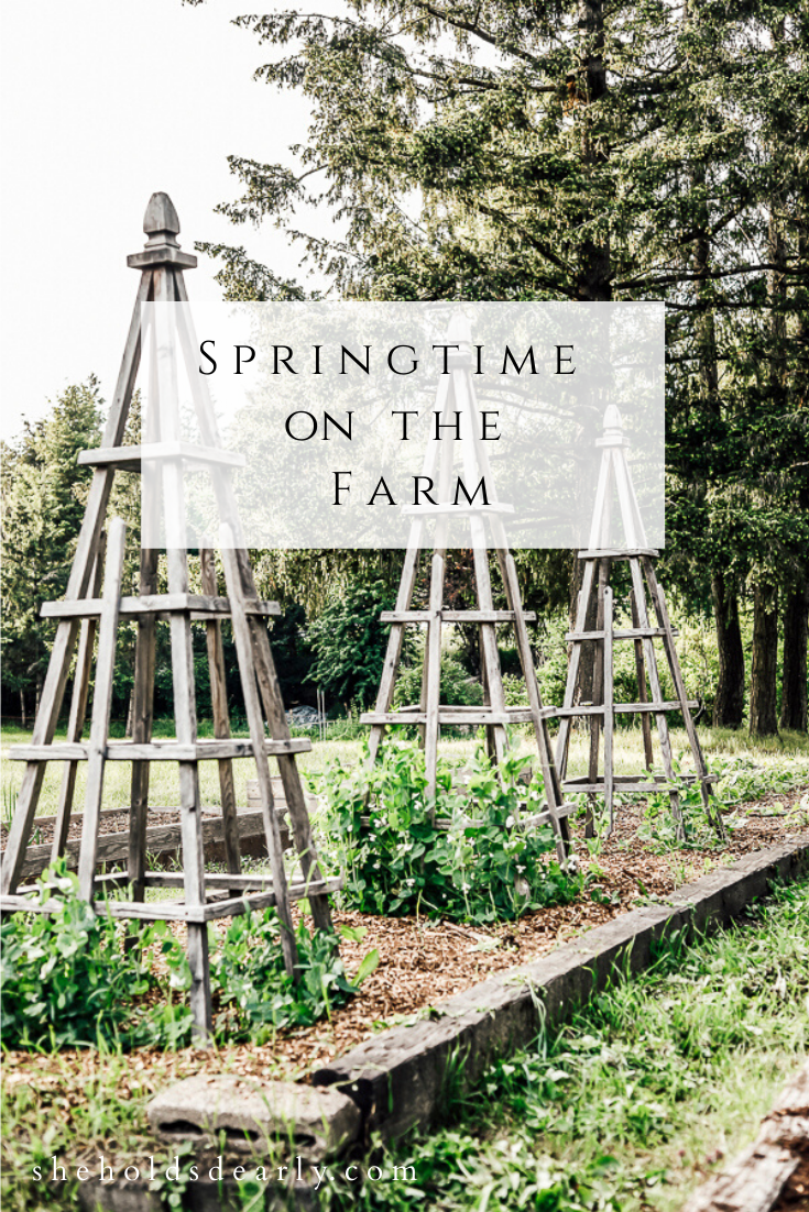 Springtime on the Farm by sheholdsdearly.com