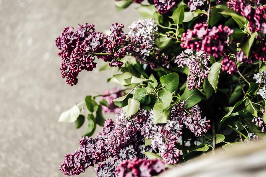Fresh Cut Lilac Bouquet Tutorial by sheholdsdearly.com