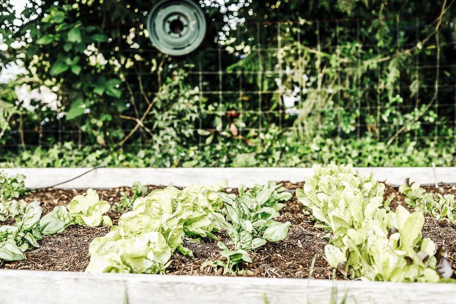 Organic Gardening Springtime by sheholdsdearly.com