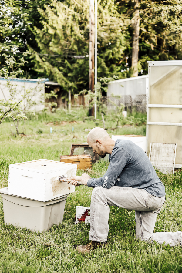 Spring Beekeeping by sheholdsdearly.com