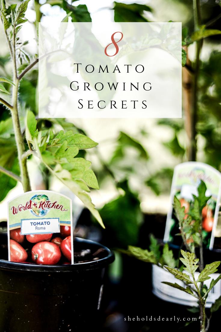 Tomato Growing Secrets by sheholdsdearly.com