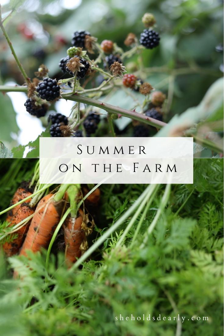 Summer on the Farm by sheholdsdearly.com