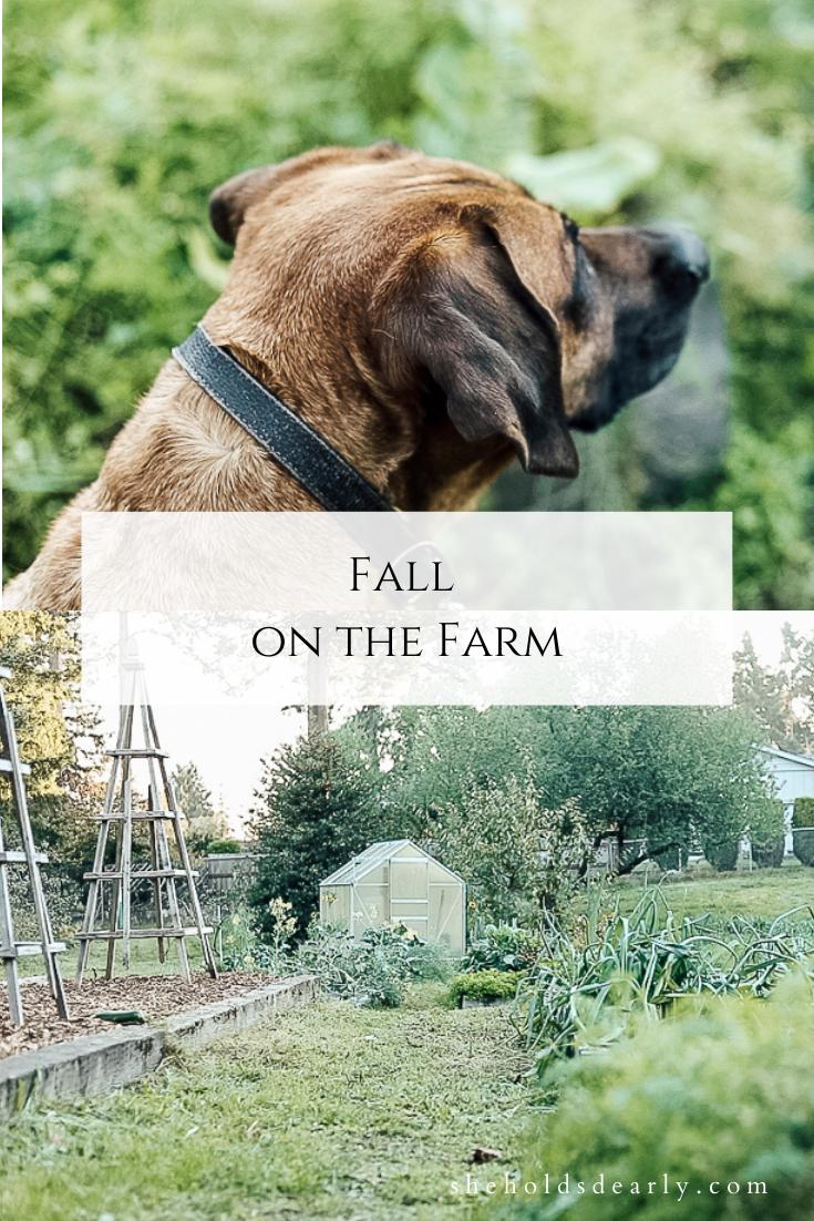 Fall on the Farm by sheholdsdearly.com